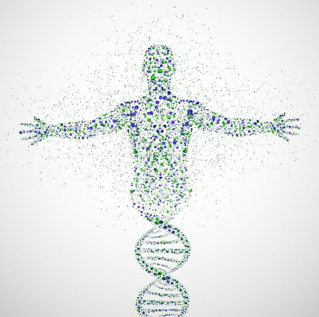 Homme composé ADN